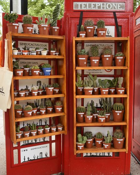 The cactus shop, Simply Cactus, in a phone box at Tombland. Picture: DENISE BRADLEY
