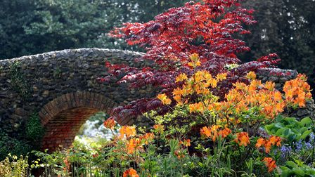 Spring colours in the Bressingham gardens.; Photo: Bill Smith