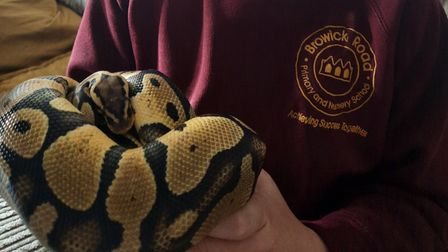 Gav the python is back at his home in Wymondham after he was found hiding under the bonnet of the family car.
