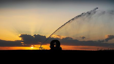 An irrigation sprinkler at work as the sunsets over King's Lynn. Picture: Ian Burt.