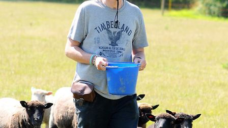 Andy Jaye feeding the sheep. Picture: James Bass
