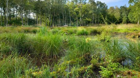 Norfolk Wildlife Trust (NWT) is appealing for help to purchase a series of arable fields and seminat