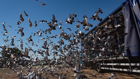 4,465 pigeons belonging to members of the Barnsley Federation of Racing Pigeons are released at Wick