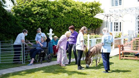 The donkeys travel around care homes across Suffolk and Norfolk to lift the spirits of residents