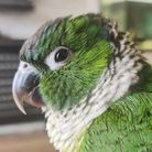 Barney the parrot