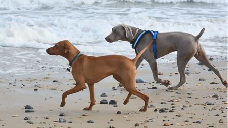 North Norfolk District Council has voted to extend its current ban on dogs from some of the area's m