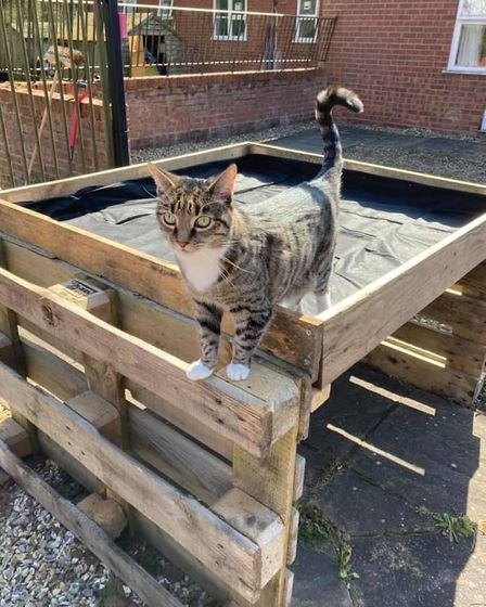 A cat surveys the work being done to the wildflower meadow