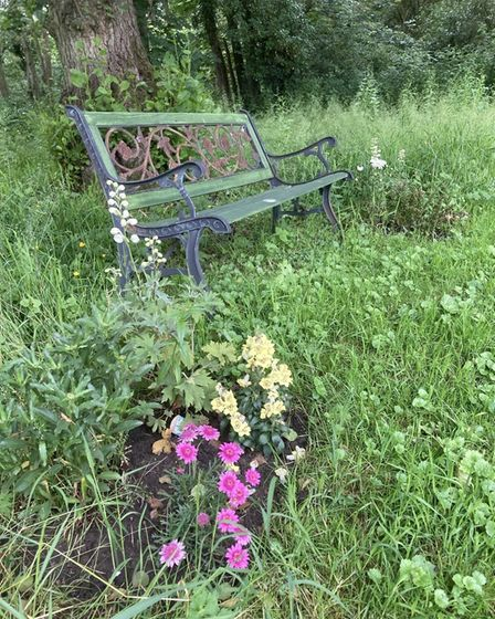 A peaceful bench at the care home's wildflower meadow