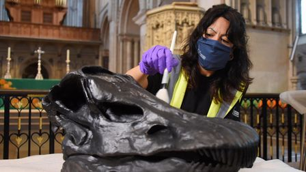 Noemi Moran, exhibition curator, cleans up Dippy the Diplodocus' skull at Norwich Cathedral. Picture