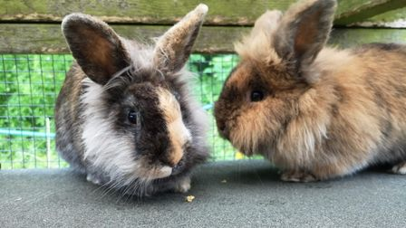 Maggieand Morgan are in search of a new home together.