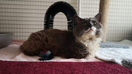 Jaxxis looking forward to finally having his own home where he will be loved and cared for.