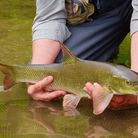 John Bailey with a barbel