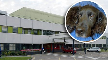 Bramble, a cocker spaniel was inside a car that was stolen from Colchester General Hospital