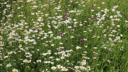 Bee orchids and other flowers have grown in numbers in Ely thanks to a successful mowing schedule.