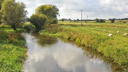 Upper reaches of the river Wensum between Lyng and Elsing. Photo: Bill Smith