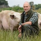 Rob Battersby managing partner for LSB Pigs with the pigs grazing ongrass cover mixes at a farm in East Rudham