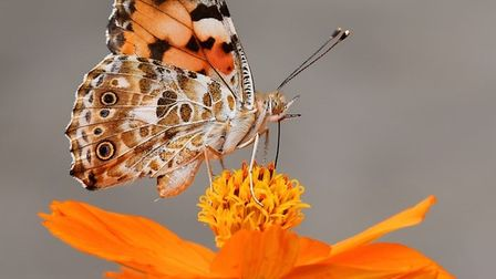 Butterflies could be arriving on Hospital Road, Doddington as part of the project