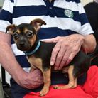 Members of staff at Oaklands Care Home in Scole have started a pet therapy group after visiting dogs
