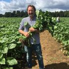 Rougham Estate owner George Agnew planting the sunflowers