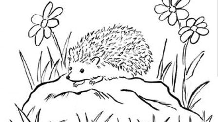 Anita Nixon explains why she is hoping to find someone to print off the picture of a hedgehog