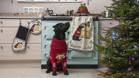 Dizzie the dog is the face of a new textile range for AGA Cookshop. Picture: ASH PHOTOGRAPHY LTD.