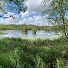 Dillington Carr SSSI (site of special scientific interest) iscentral to the Wendling Beck Exemplar Project