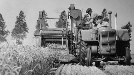 Richard King at the wheel of a 1930sCase tractor, and Billy Hammond on a 1940s Ransomes combine, September 1993