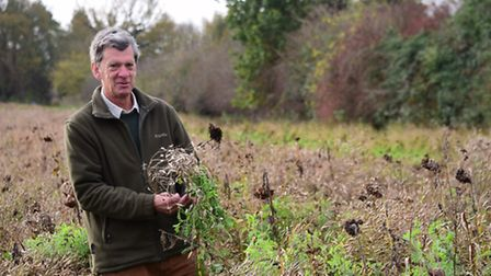 Charles Sayer on the strips of his land at Sparham Hall planted with wild bird seed mixture of mille