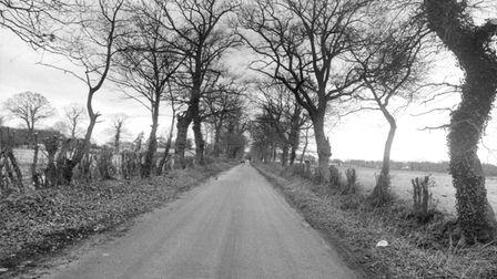 A black and white photograph of a road in Hainford lined with trees