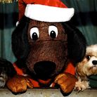 FAITH Animal Rescue in Hickling are for the first time opening a Santa Paws' grotto, where local dog