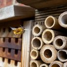 A bee entering a bee hotel