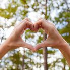 Hand shaped heart against forest background.
