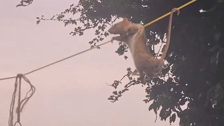 Melissa Paterson, from Sutton, recorded a rat climbing a washing line for food.