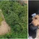 Buddy the dog (R) was found in a field after a drone was flew around the area to find him.