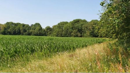 Land off Redwald Road in Rendlesham, to be developed for 75 homes