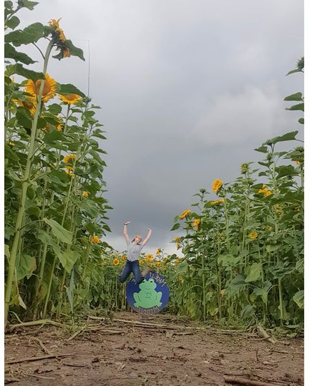 In the middle of one of the sunflower mazes at Frogs Farm near Eye in Suffolk