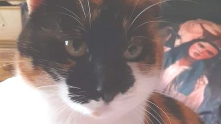 A cat - Daisy, who went missing between Braintree and Dunmow after jumping out a man's car on the A120