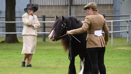 Judging of the best young gypsy cob at the Norfolk Equestrian Show, at the Showground. Picture: DENI