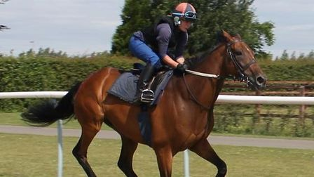 Ex-racehorse Old Vic on the British Racing Society gallops in 2014