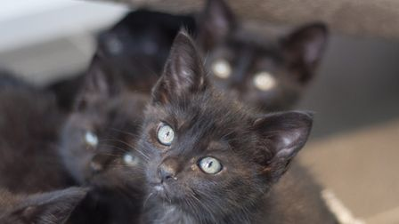 An RSPCA cattery in Norfolk has seen a dramatic influx of cats and kittens