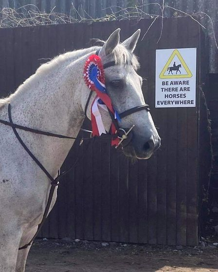 Finn, known as Rynnstone Thunder at competitions
