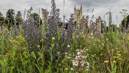 Bury in Bloom has entered the wildflower display into the Anglia in Bloom competition.