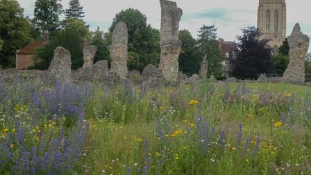 The flowers with the abbey ruins in the background.