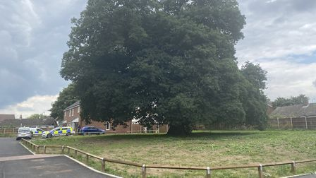 The oak tree where the daughter of Malgorzata Lechanska ran to before police were called following concerns for safety.