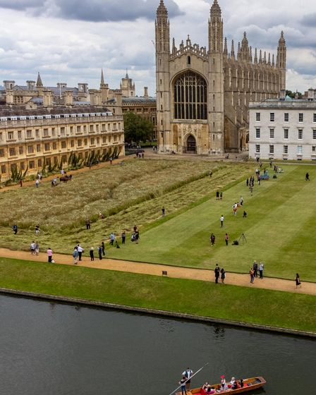 Wildflower meadow at King's College, Cambridge harvested with help of Shire horses.Kings College