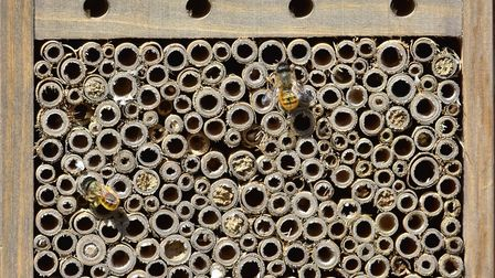 Solitary bees in a bee home
