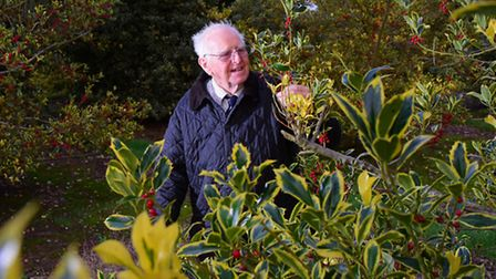Peter Boardman at How Hill Farm where he grows more than 100 different varieties of holly.PHOTO BY S