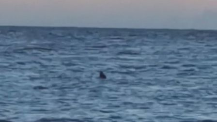 A basking shark spotted off Caister beach on August 7.