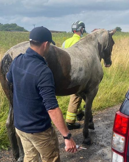 After a check up with the vet the horse was able to trot off with her owners