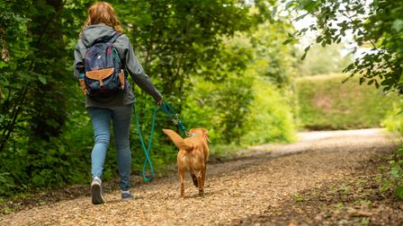 The innovative leash offers a more secure link between walker and dog